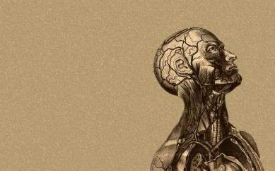 anatomy-of-the-brain-hd-wallpaper